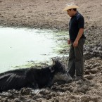 A local farmers tries to rescue his cow, which got stuck in mud while looking for water. (Photo from the Pasorapa mayor's office)