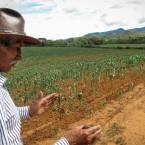 Don Deterlino Hinojosa, a resident of Pasorapa, explaining the loss of his harvest. (Photo by Leny Olivera)