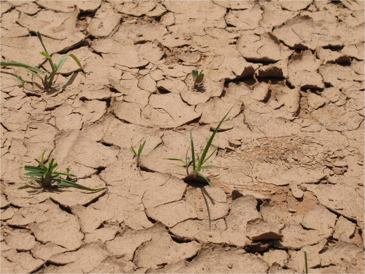http://climatechange.terra-justa.org/blog/2012/03/28/droughts-are-about/